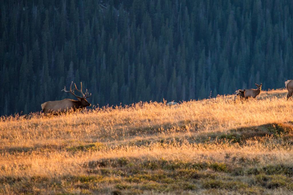 Hello Hunting Season